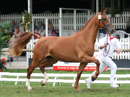 Het gelderse paard